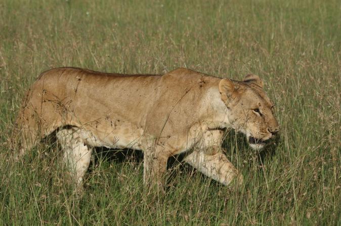 3 days masai mara safari from Nairobi
