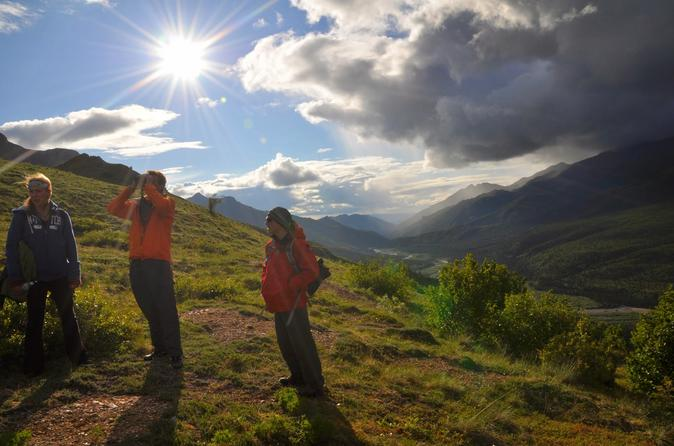Denali wilderness hiking tour in denali national park and 184121