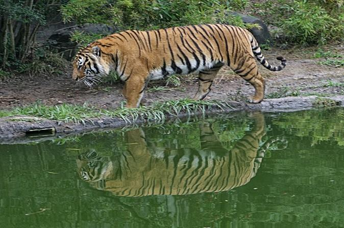 Private Day Trip to Sundarban from Khulna