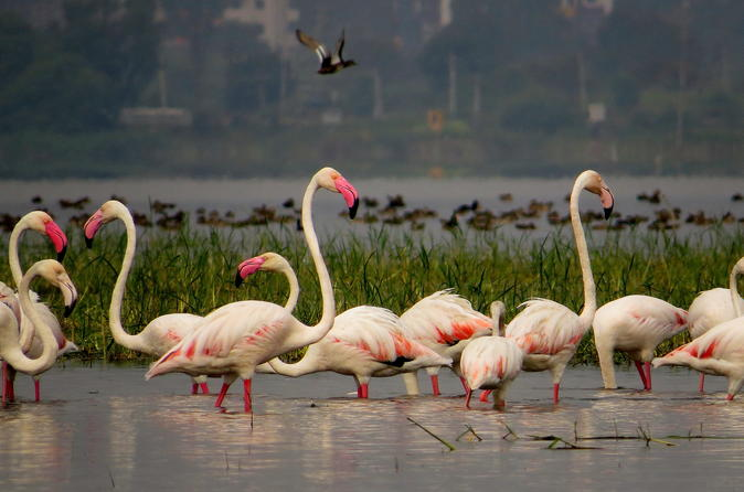Full-Day Bird Safari Excursion To Bhigwan From Pune