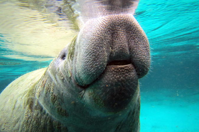 Private manatee tour in crystal river 202039