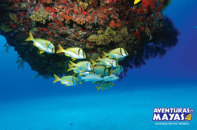 Mergulho com snorkel em Cancun
