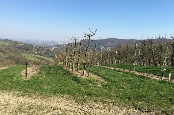 Klosterneuburg hike for small group (day trip, 4 hrs walking time)