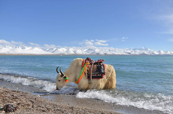 2 day small group lake namtso experience from lhasa in lhasa 265991