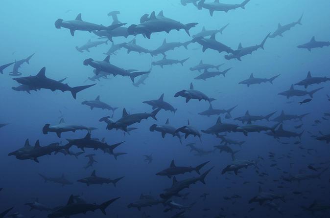 Gordo Banks Scuba Diving Adventure