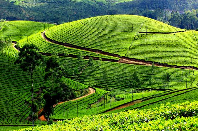 private day trip to munnar from kochi (cochin) in japan asia