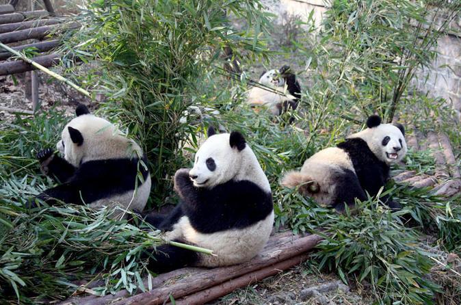 12-Day Small Group Tour to Shanghai - Beijing - Xian - Chengdu - Shanghai