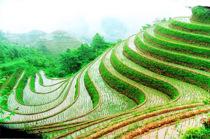 Guilin Private Tour: Longji Rice Terraces Day Tour in Longsheng
