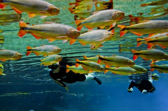 Recanto Ecologico Rio da Prata Admission Ticket including Trail and Snorkeling