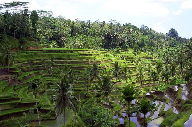 Excursão particular: tudo sobre Ubud excursão de dia inteiro