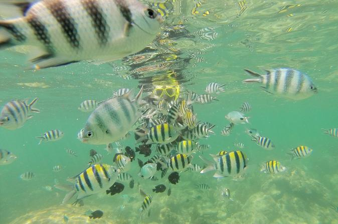 Glass bottom boat excursion with snorkeling from diani beach in diani beach 184567