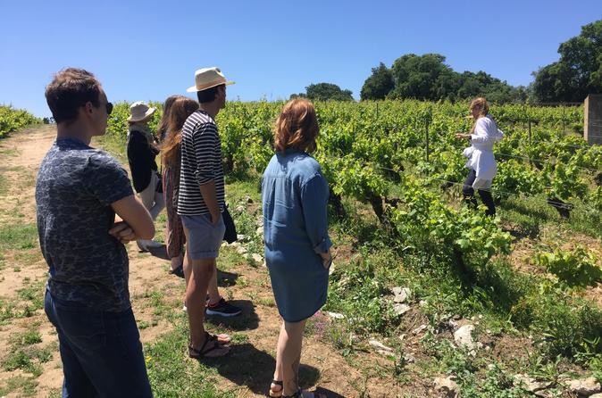 Authentic Winery & Wine Tasting