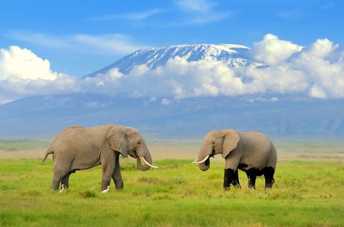 3 Days 2 Nights Amboseli Kenya Safari