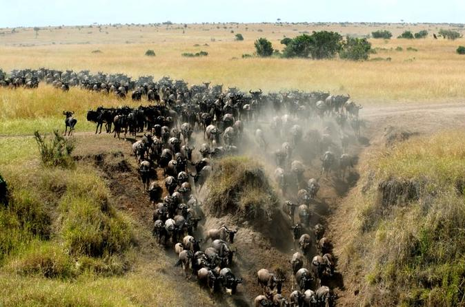 6 Days Masai Mara, Lake Nakuru & Amboseli Safaris