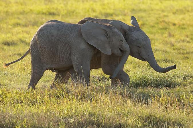7 Days AMboseli , Lake Naivasha Lake Nakuru , Masai Mara 2018 safari