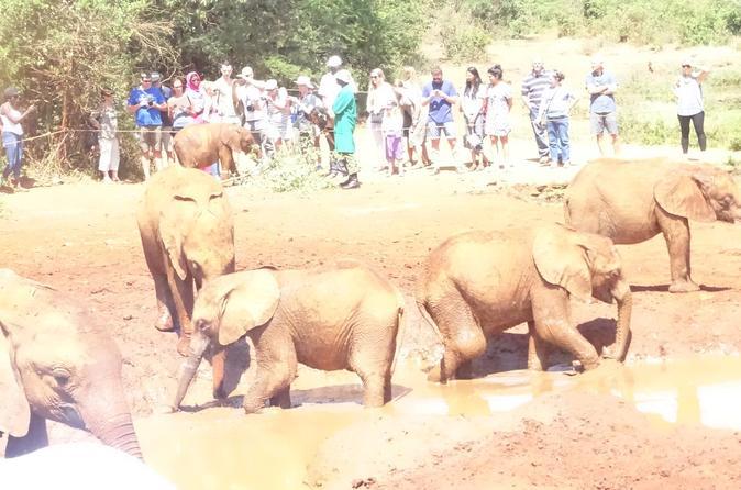 Full-Day Tour of Nairobi Animal Orphanage, Elephant and Giraffe Centers