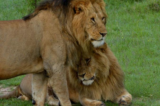 Africa's Leading Wildlife Game Reserve - Masai Mara