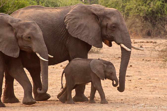 The Journey Through Kenya Explorer Safari