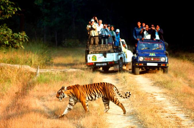 6-Night Golden Triangle Tour with Ranthambore from Delhi