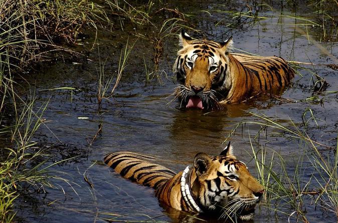 7-Day Wildlife Safaris in Central India from Jabalpur to Khajuraho