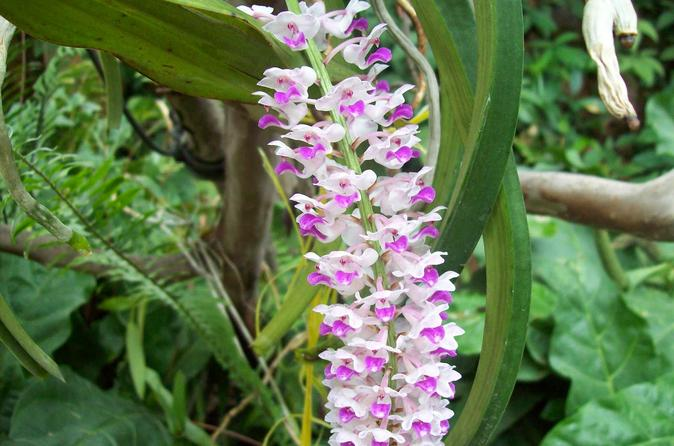 8 night adventure tour of northeast india wild orchids valleys and in guwahati 218564