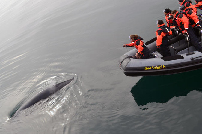 Small-Group Reykjavik RIB Whale Watching Cruise with Whales of Iceland Exhibiton Entrance Ticket