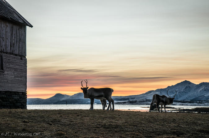 Small-group Arctic Landscapes Sightseeing Tour from Tromso - Winter