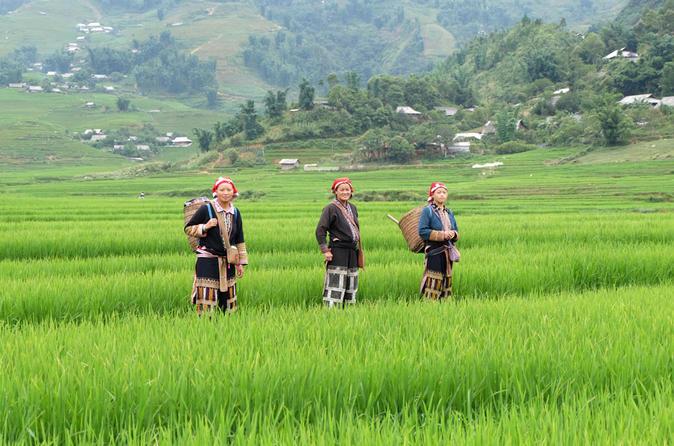 Half-Day Sapa Rice Fields Walking Tour