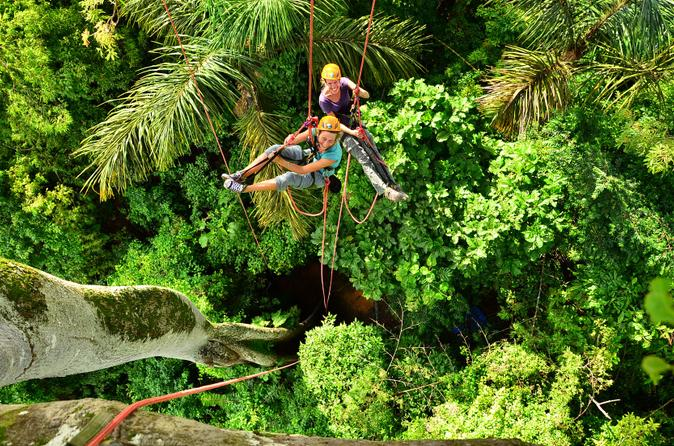 Treetop climbing in manaus in manaus 191600