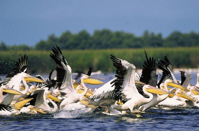 Full-Day Private Tour to The Fascinating Danube Delta from Bucharest