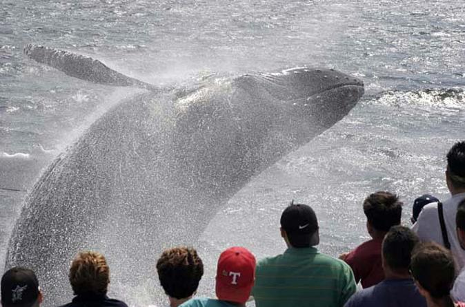 Whale Watching Tour in Gloucester