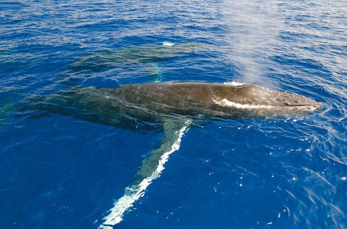 Luxury Whale Watch