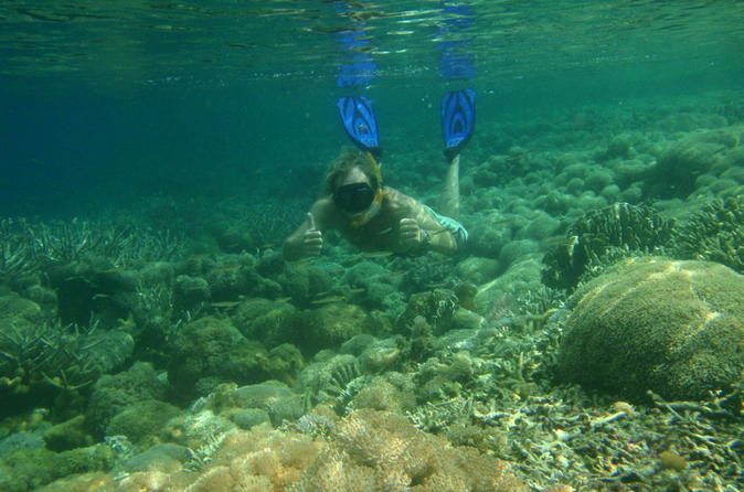 Gili island snorkeling day trip in mataram 211397