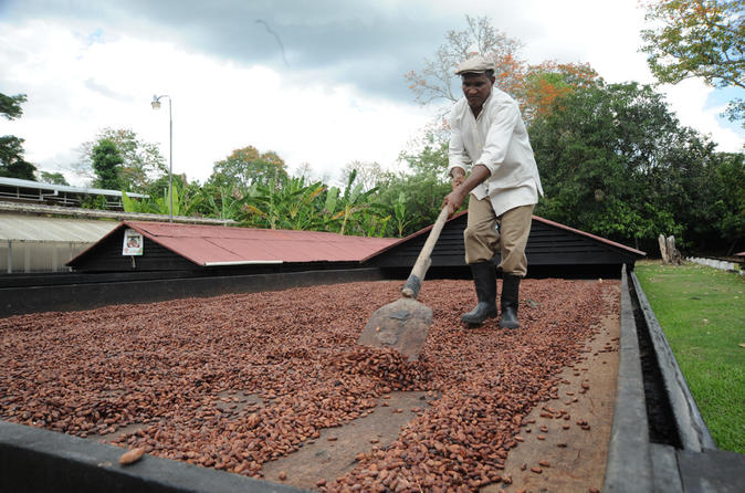 Cacao plantation and chocolate factory tour in san francisco de macoris 188515