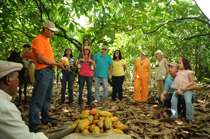 Cacao plantation and chocolate factory tour with tasting of chocolate in san francisco de macoris 189696