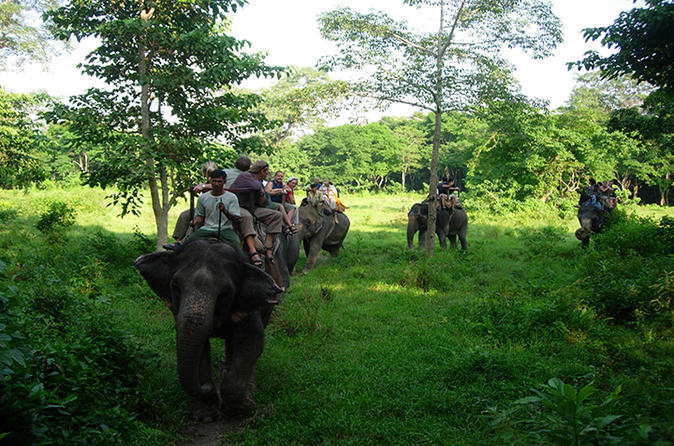 3 day chitwan wildlife safari tour from kathmandu in kathmandu 186696
