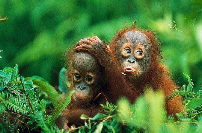 Private tour gunung leuser national park trekking tour with orangutan in medan 192613