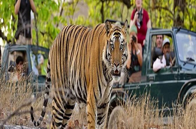 Private Tour: 2-Night Ranthambore National Park from Jaipur