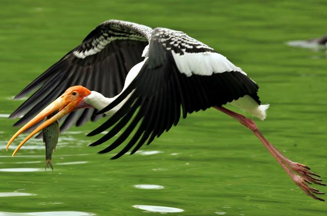 Private Day Trip to the Keoladeo National Park in Bharatpur from Jaipur