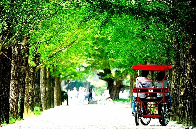 Private Full Day Tour to Nami Island and Free style Seoul city tours
