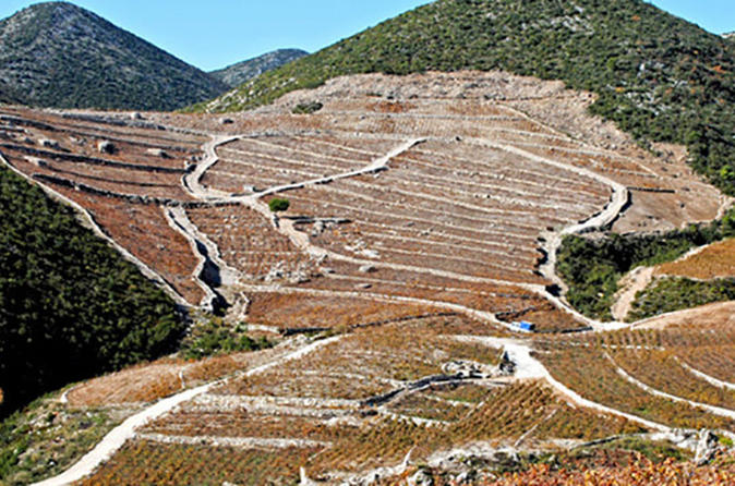Wine and Gastronomy Tour from Dubrovnik