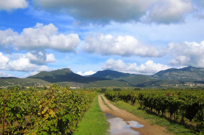Private tour exclusive wine tour in languedoc from montpellier in montpellier 253144