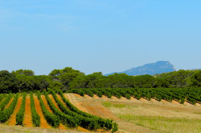 Small group half day languedoc pic saint loup wine tour from in montpellier 187043