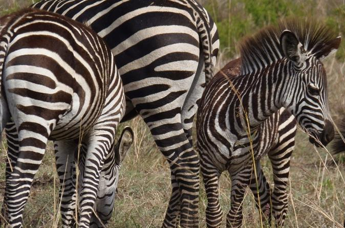 11-Day Safari Adventure in Southern Tanzania