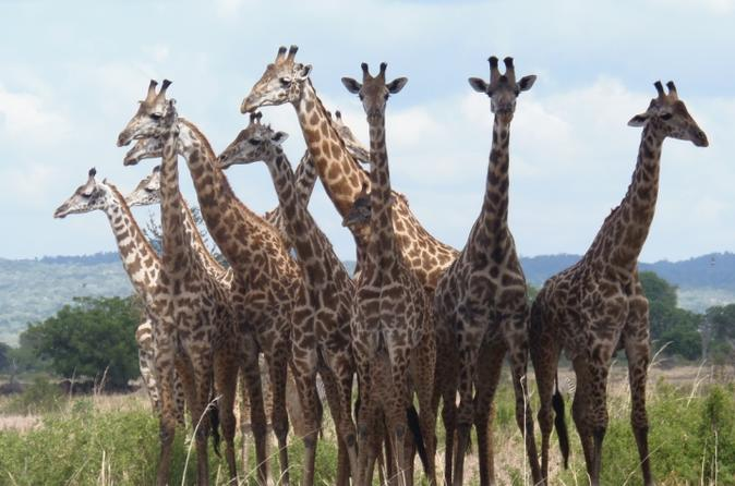 Mikumi wildlife experience in dar es salaam 226162