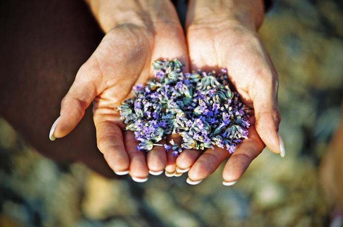 Hvar lavender tour in hvar 205261