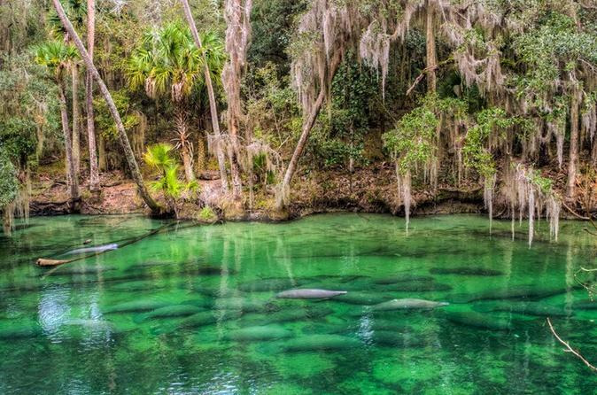 Bicycle Tour to Blue Springs From Orlando