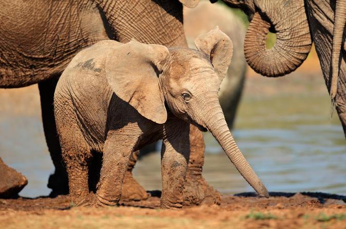 Full day Addo Elephant National Park tour from Port Elizabeth