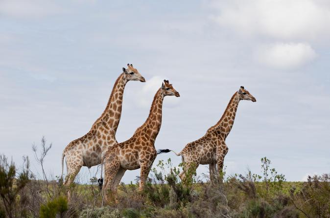Half Day Kragga Kamma Safari in Port Elizabeth