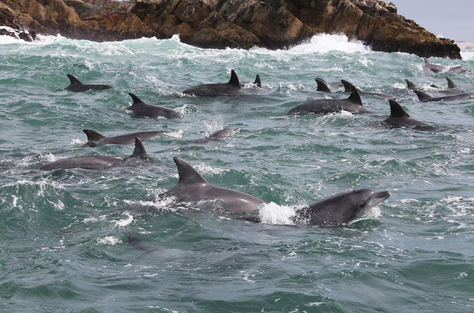 Island Cruise and Big 5 Safari Tour in Port Elizabeth